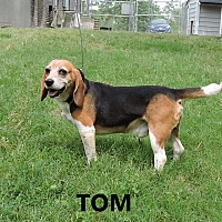 Adopt A Pet :: Tom - Washington, GA