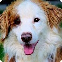 Adopt A Pet :: BARRY(LOST HIS BEST FRIEND!!! - Wakefield, RI