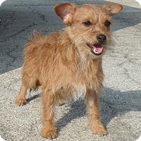 Adopt A Pet :: Ralph - Seguin, TX