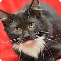 Adopt A Pet :: Blackjack 171297 - Atlanta, GA