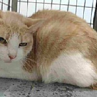 Adopt A Pet :: 18-04026 - Downey, CA