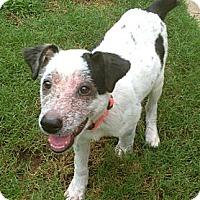 Adopt A Pet :: Ellie - Silsbee, TX