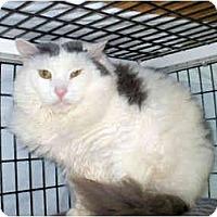 Adopt A Pet :: Samson - Colmar, PA