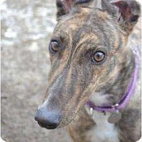 Adopt A Pet :: Devin (Lead The Way) - Chagrin Falls, OH