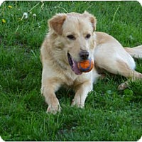 Adopt A Pet :: Riley - Fort Hunter, NY