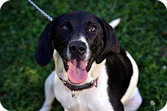 Hound (Unknown Type) Mix Dog for adoption in Broadway, New Jersey - Maggie