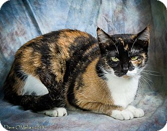 Domestic Shorthair Cat for adoption in Anna, Illinois - DELILAH JANE