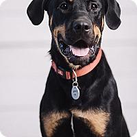 Adopt A Pet :: Kolby - Portland, OR