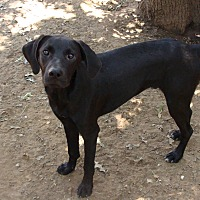 Adopt A Pet :: Elvis - Blanchard, OK