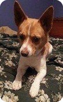 Terrier (Unknown Type, Small) Mix Dog for adoption in Hampton, Virginia - RAFIKI
