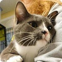 Adopt A Pet :: Eddie - Winston-Salem, NC
