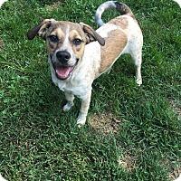 Adopt A Pet :: Rory (aka Aurora) - Columbia, TN