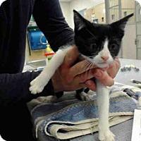 Adopt A Pet :: A143415 - Salinas, CA