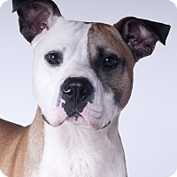 Adopt A Pet :: Spike - Chicago, IL