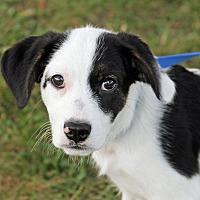 Adopt A Pet :: Rex - Joliet, IL