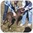 Photo 2 - Plott Hound Mix Dog for adoption in Shelbyville, Kentucky - Jana