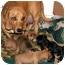 Photo 4 - Dachshund Mix Dog for adoption in Glenpool, Oklahoma - Minnie