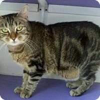 Adopt A Pet :: Sarabi - Richboro, PA