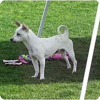 Adopt A Pet :: RUSSELL III - Scottsdale, AZ
