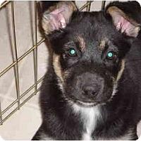 Adopt A Pet :: Runt - Washington, NC