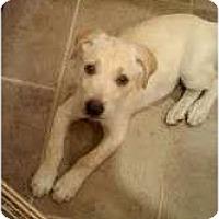 Adopt A Pet :: Coda - Washington, NC