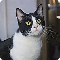 Adopt A Pet :: Thurman - New Port Richey, FL