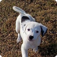 Adopt A Pet :: Fella - Greenville, RI