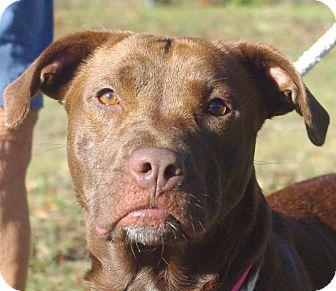 Retriever (Unknown Type) Mix Dog for adoption in Daytona Beach, Florida - Bella