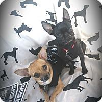 Adopt A Pet :: Peeta and Prim - Homewood, AL