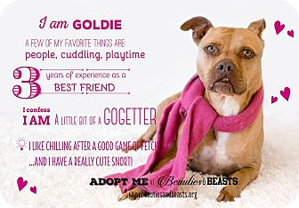 Pit Bull Terrier Mix Dog for adoption in Wichita, Kansas - Goldie