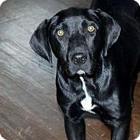 Adopt A Pet :: Little River - Naugatuck, CT