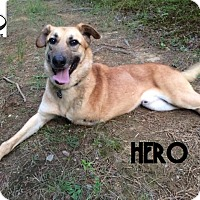 Adopt A Pet :: Hero - Adopted Sept 2016 - Huntsville, ON