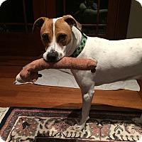 Adopt A Pet :: Regan - Sonoma, CA