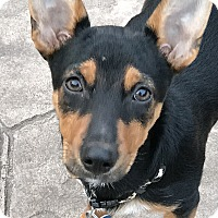 Adopt A Pet :: Natasha - Middlesex, NJ