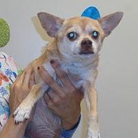Adopt A Pet :: Cimmamon - Wildomar, CA