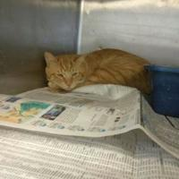 Adopt A Pet :: 35775446 - Los Lunas, NM