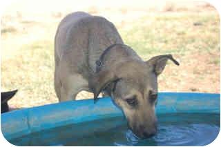 German Shepherd Dog Mix Dog for adoption in Acton, California - LAYLA