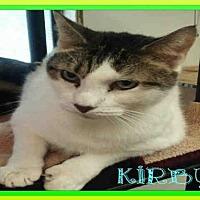 Adopt A Pet :: KIRBY - Fort Walton Beach, FL