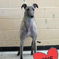 Adopt A Pet :: DKC THE GAMBLER - Grandville, MI