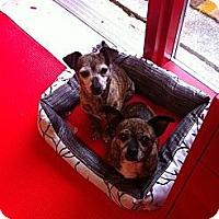 Adopt A Pet :: Sally - Poulsob, WA
