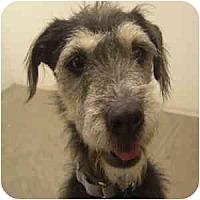 Adopt A Pet :: Tex - Phoenix, AZ