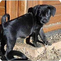 Adopt A Pet :: Lyla - Arlington, TX