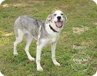 Great Pyrenees Mix Dog for adoption in Bolivar, Tennessee - Roman