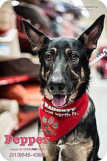 German Shepherd Dog/Shepherd (Unknown Type) Mix Dog for adoption in Detroit, Michigan - Pepper-Adopted!
