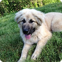 Adopt A Pet :: Rufus - Somers, CT