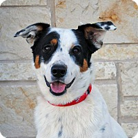 Adopt A Pet :: Trigger - Weatherford, TX