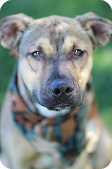 Shepherd (Unknown Type) Mix Dog for adoption in Twin Falls, Idaho - Michaelangelo