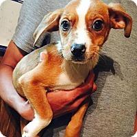 Adopt A Pet :: Blaze - Ocala, FL