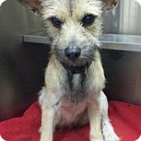 Adopt A Pet :: Ears - Terrell, TX