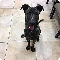 Adopt A Pet :: Artax - Mission Viejo, CA
